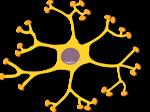 1206565055109646538keikannui_neuron-interneuron_2.svg.hi